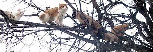 Куда звонить чтобы сняли кота с дерева